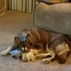 """""""I love this toy, until I have to kill it."""""""