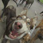 Ebony's derpy dog, Aspen.