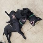 """Day Care Friends Bella and Rosco """"twinning"""""""